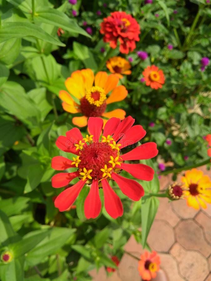 Columbiaanse bloem royalty-vrije stock afbeeldingen