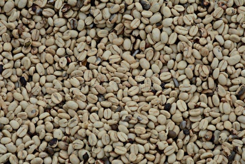 Columbiaanse koffiebonen royalty-vrije stock afbeeldingen