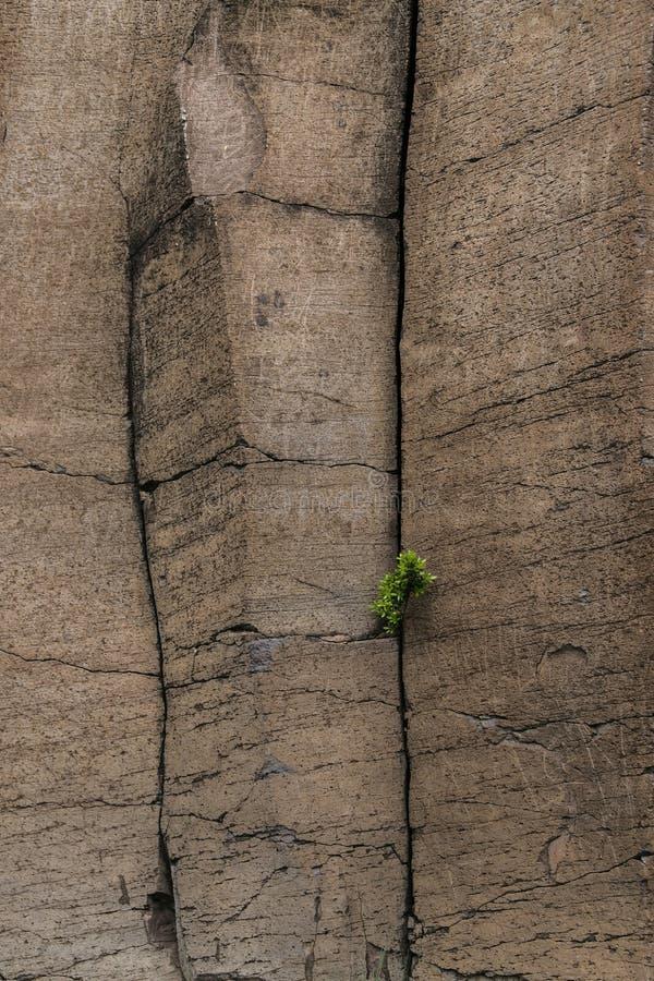 Giant basalt columns at La Gomera, Canary Island , Spain stock image