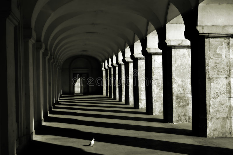 Columns and shadows. A white pigeon between shadow-lines formed by ancient columns stock image