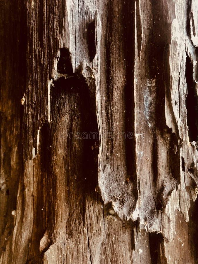 Coluna de madeira fotografia de stock royalty free