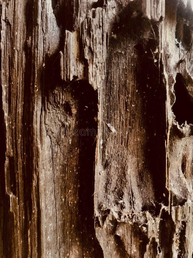 Coluna de madeira fotografia de stock