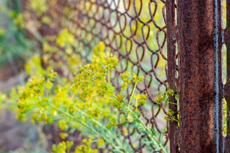 Coluna e grupos oxidados de flores amarelas imagem de stock