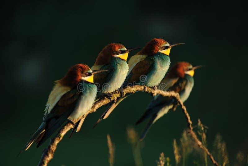 Colurfulvogels royalty-vrije stock fotografie