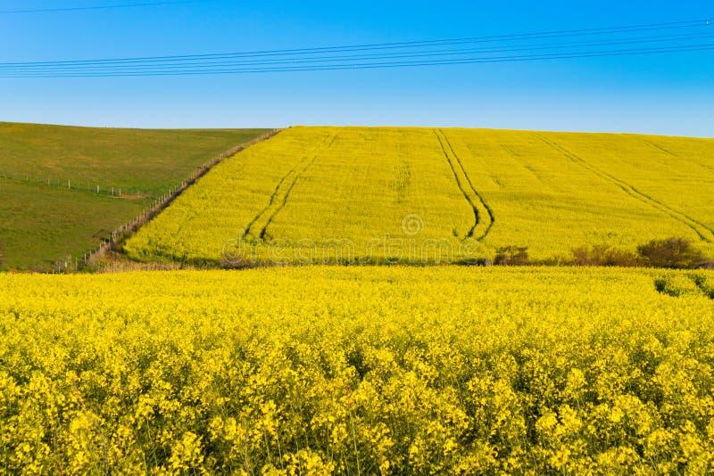 A colza coloca ao longo da estrada a Franschhoek, África do Sul imagem de stock royalty free