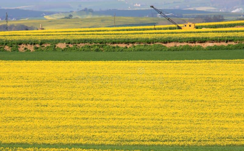 colza dźwigowy poly Germany kolor żółty obrazy royalty free