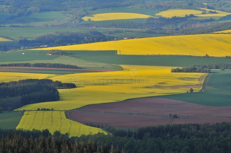 Colza de florescência, napus do Brassica, violação, opinião dos campos da violação de semente oleaginosa da parte superior fotografia de stock