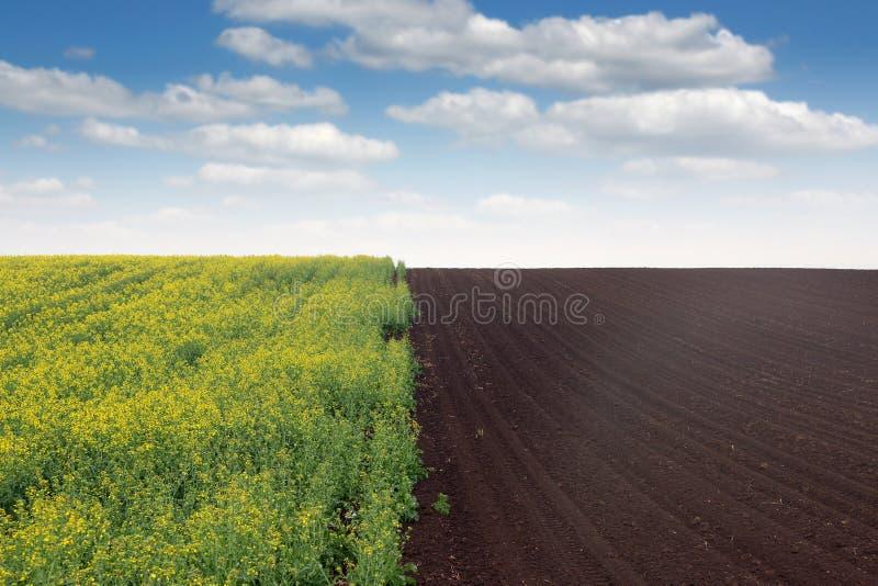 Colza e campo arato fotografie stock libere da diritti