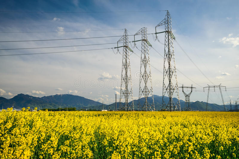 Colza field and powerline electricity. Scenery in Transylvania, Romania with colza field and powerline electritiy, Carpathian Mountains in background stock photography