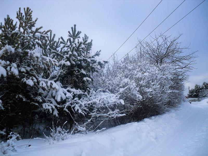 Comí el crepúsculo invernal en la nieve foto de archivo