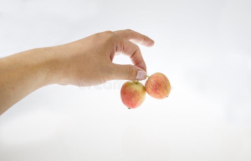 Com as duas maçãs pequenas em sua mão foto de stock