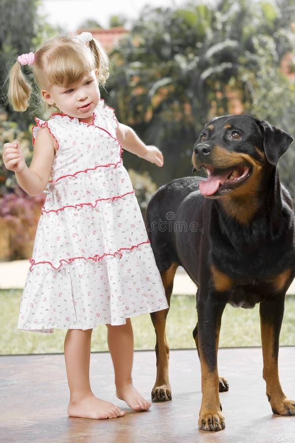 Com cão fotografia de stock