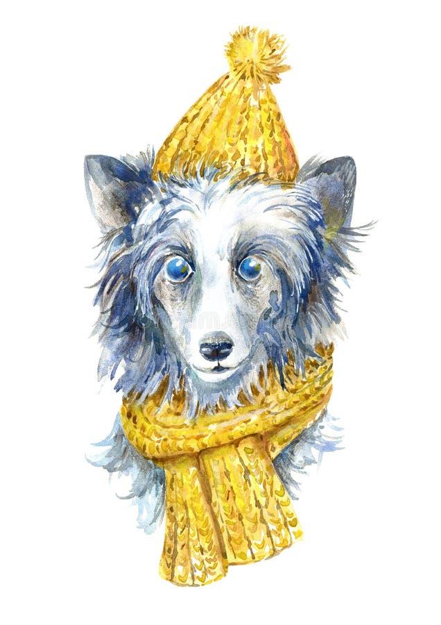 Com crista chinês no chapéu do inverno e no retrato do lenço ilustração royalty free