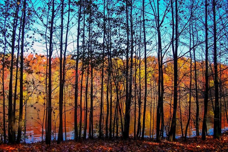 Com a paisagem das árvores imagem de stock