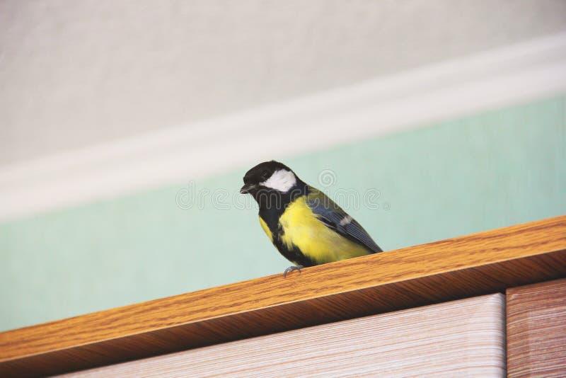 Comandante del Parus Pájaro en la casa foto de archivo libre de regalías