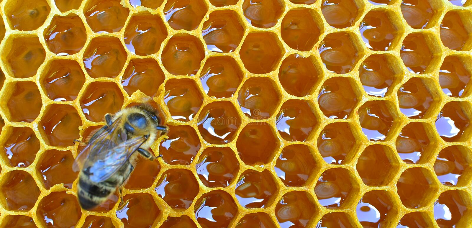 Download Comb honey with bee stock photo. Image of honey, full - 94398782