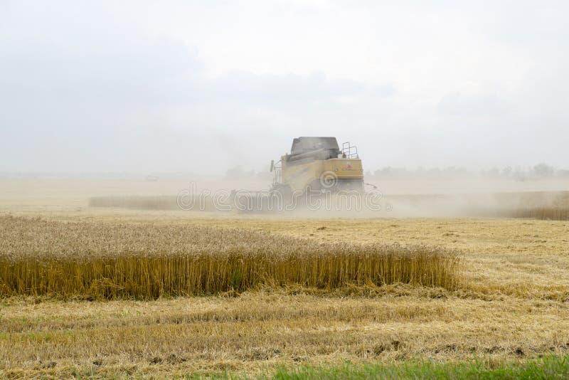 Combain recolhe na colheita do trigo Maquinaria agrícola no campo imagens de stock royalty free