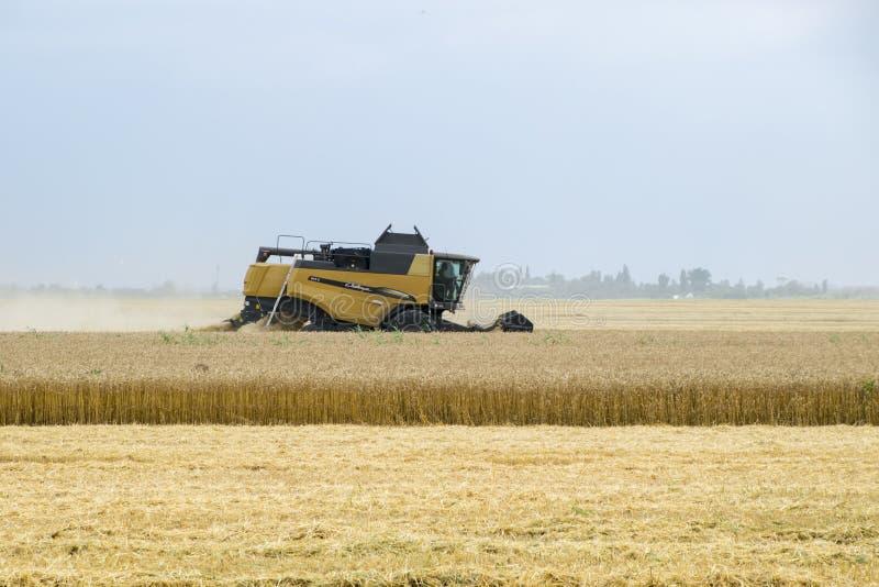 Combain verzamelt op het tarwegewas Landbouwmachines op het gebied stock fotografie