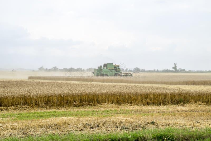 Combain zbiera na pszenicznej uprawie Rolnicza maszyneria w polu obrazy stock