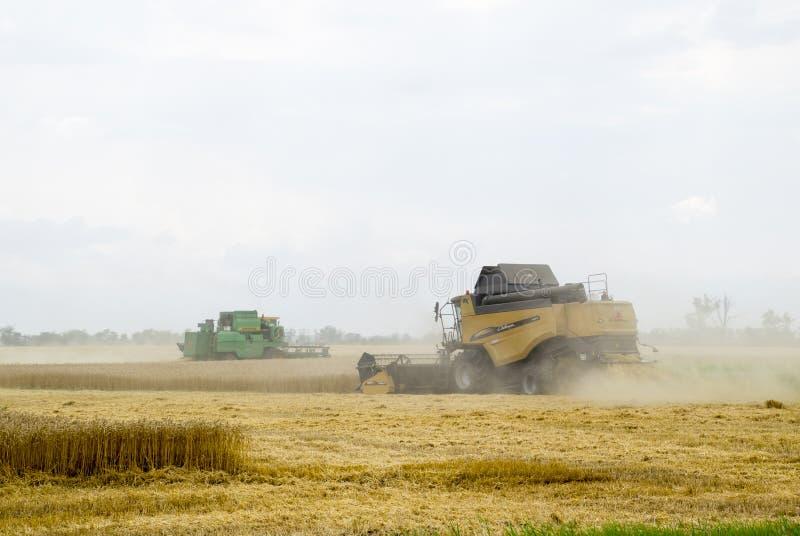 Combain zbiera na pszenicznej uprawie Rolnicza maszyneria w polu zdjęcie stock