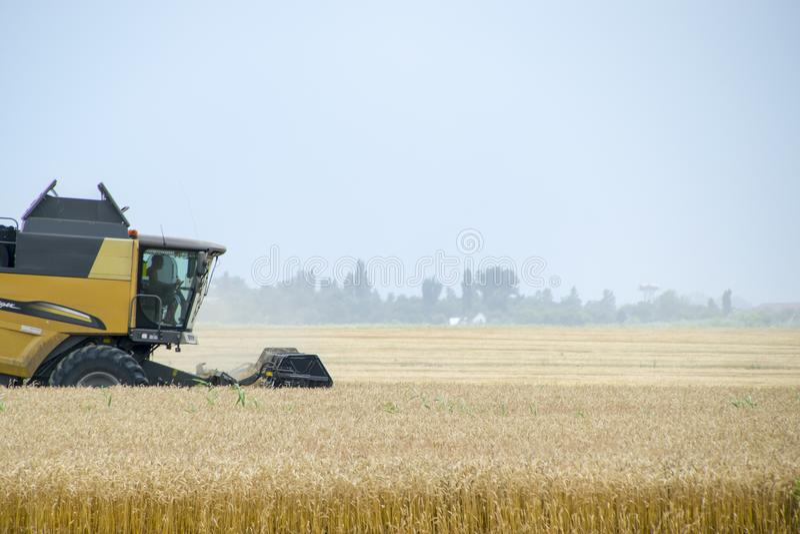Combain zbiera na pszenicznej uprawie Rolnicza maszyneria w polu obrazy royalty free