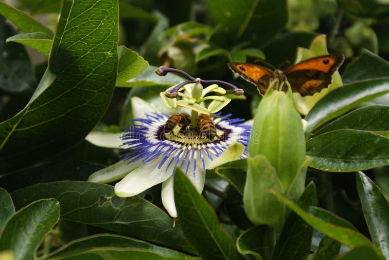 Combat pour le nectar photo stock
