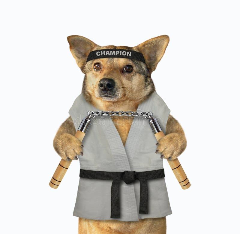 Combatiente del karate del perro con el nunchuck imagen de archivo libre de regalías