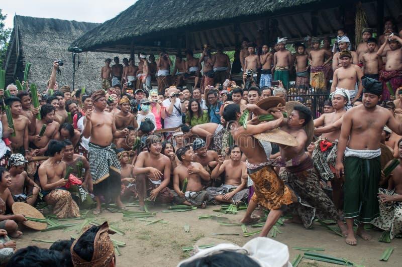 Combattimento di Pandan nel villaggio Bali di Tenganan fotografia stock libera da diritti