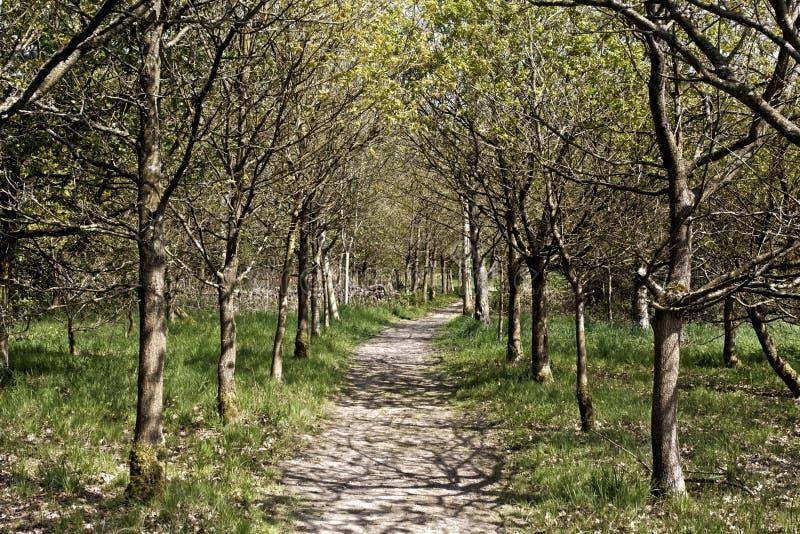Download Combe doliny RSPB rezerwa zdjęcie stock. Obraz złożonej z dolina - 32107730