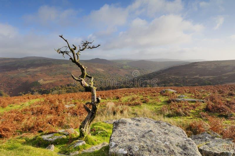 combestone dartmoor tor fotografia royalty free