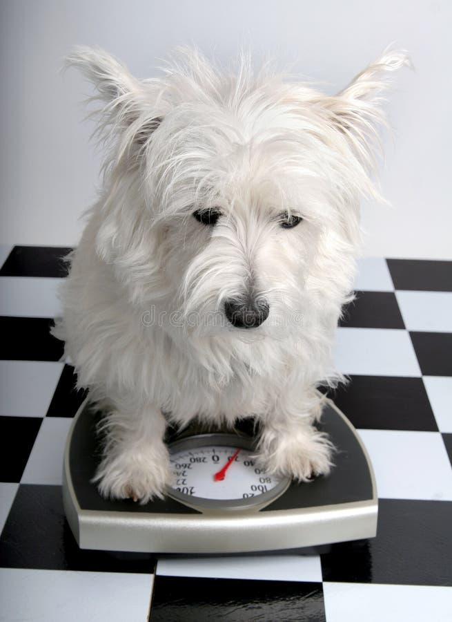 Combien est-ce que je pèse ? image libre de droits
