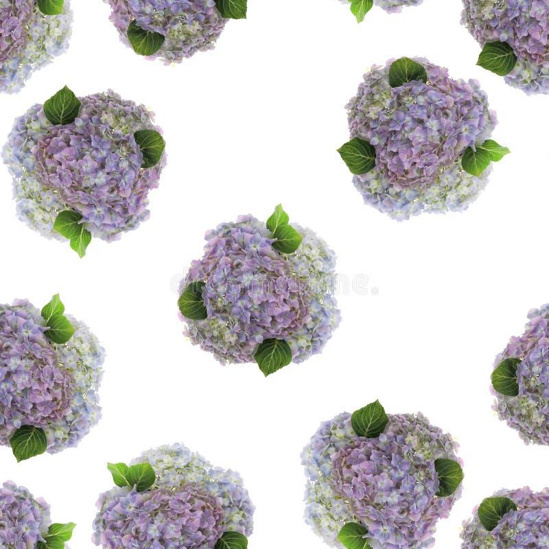 A combinação colorida da cor pastel de hortênsia fresca fotografada floresce no fundo branco, imagem sem emenda a ser repetida in imagem de stock royalty free