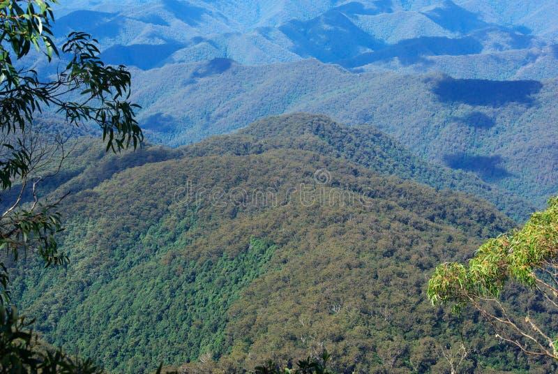 Combinación de dos bosques imágenes de archivo libres de regalías