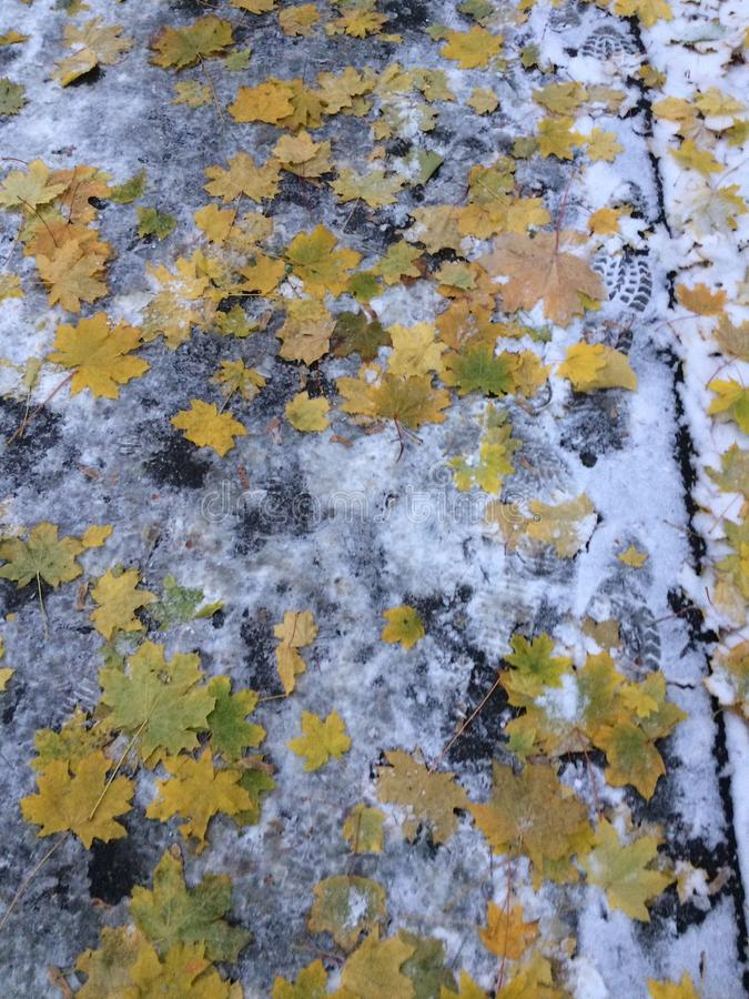 Combinado do verão, do outono e do inverno imagens de stock