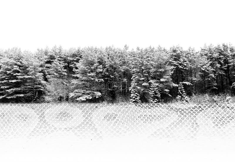 combinaison de deux photos : forêt d'hiver et peau de serpent du python royal Pékin, photo noire et blanche de la Chine photographie stock