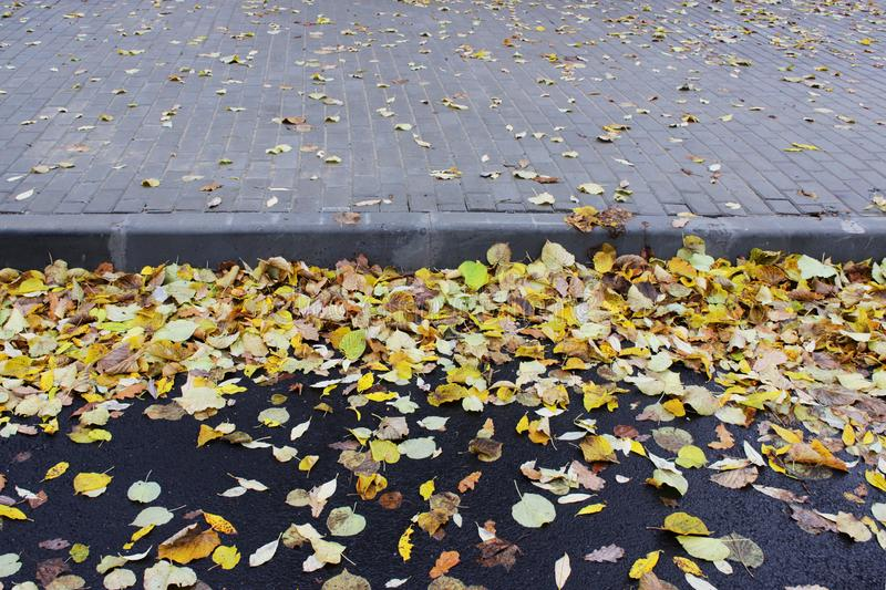 The combination of yellow autumn leaves on the asphalt and paving tiles near the bus parking lot royalty free stock photo