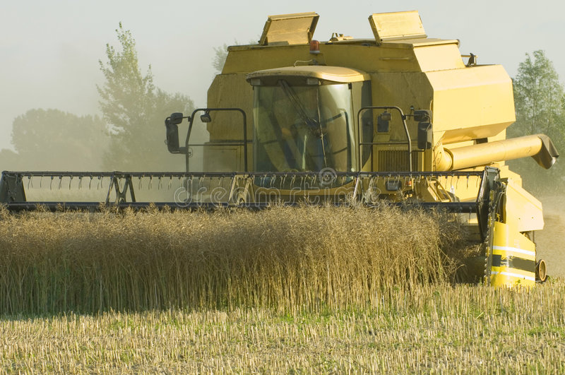 combine corn earning harvester στοκ εικόνα