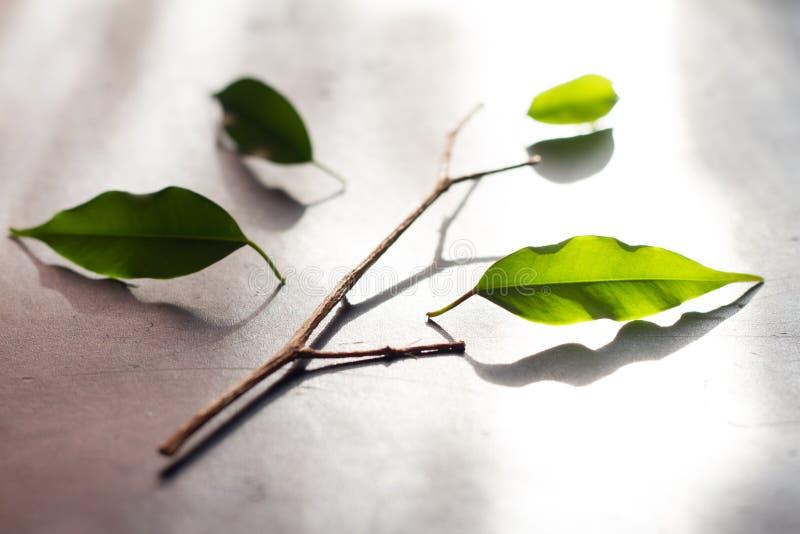 Combine El Concepto Del Negocio De La Metáfora Con El árbol Y Las ...