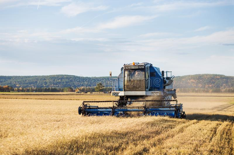 Combine harvester agriculture machine harvesting golden ripe wheat field. stock image