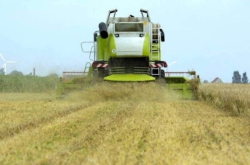 Combine harvester corn earning stock photo