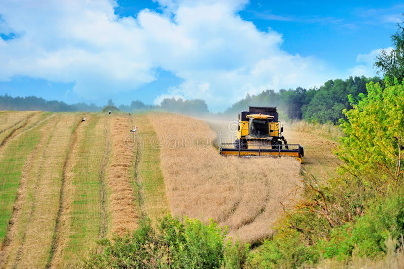 Combine harvester harvesting wheat cereal royalty free stock photography