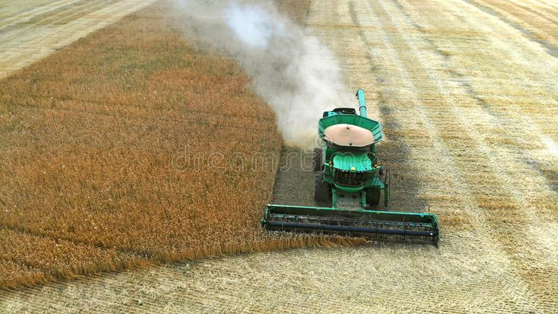 Aerial. Combine harvester harvests autumn wheat crop. Combine harvester harvests autumn wheat crop royalty free stock images