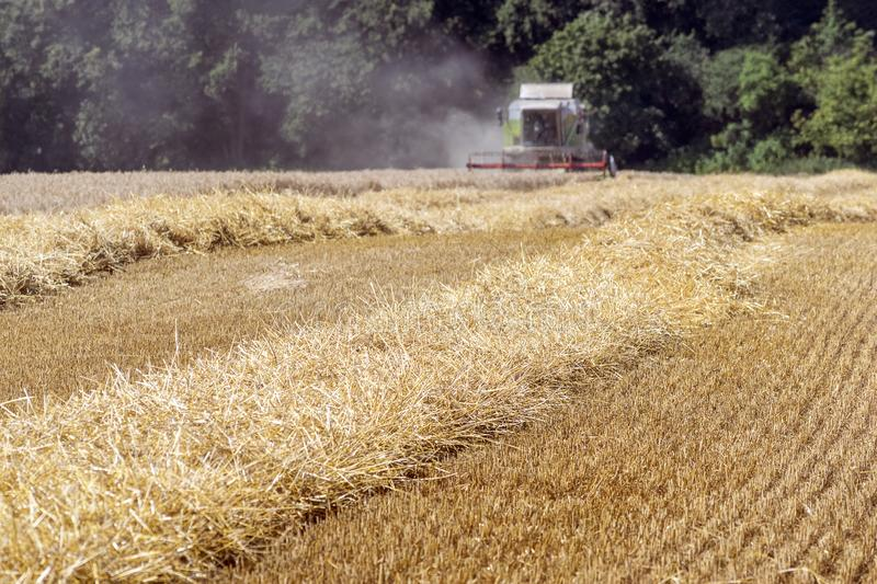 Combine harvester harvests ripe wheat. agriculture stock images