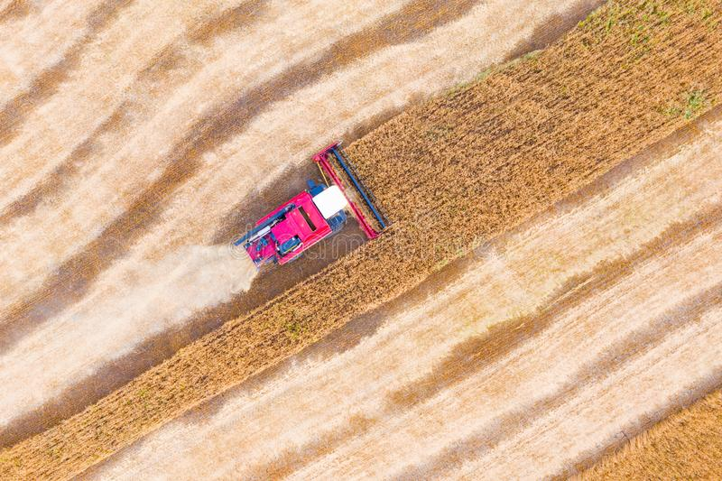 Combine harvester harvests wheat in the field at sunset in autumn in Russia. view from a height of equipment and field royalty free stock image