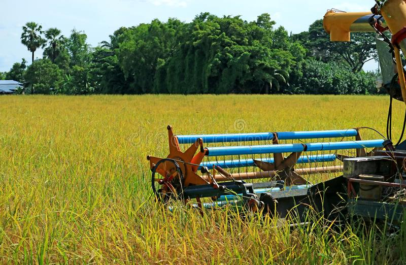 Combine Harvester Machine Harvesting Ripe Rice Plants in the Golden Paddy Field, Central Thailand. Nature Background stock photos