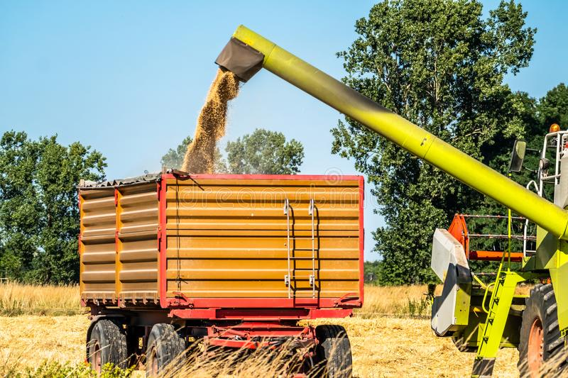 Combine harvester reaping wheat. In the summer royalty free stock photos