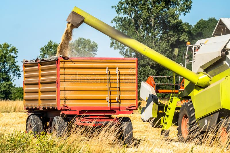 Combine harvester reaping wheat. In the summer stock images
