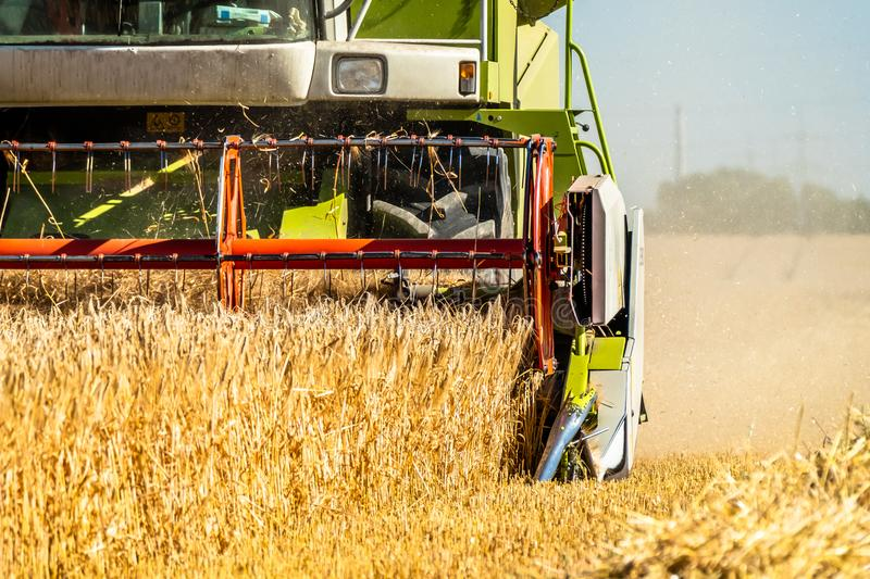 Combine harvester reaping wheat. In the summer royalty free stock image