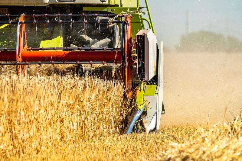 Combine harvester reaping wheat. In the summer stock image