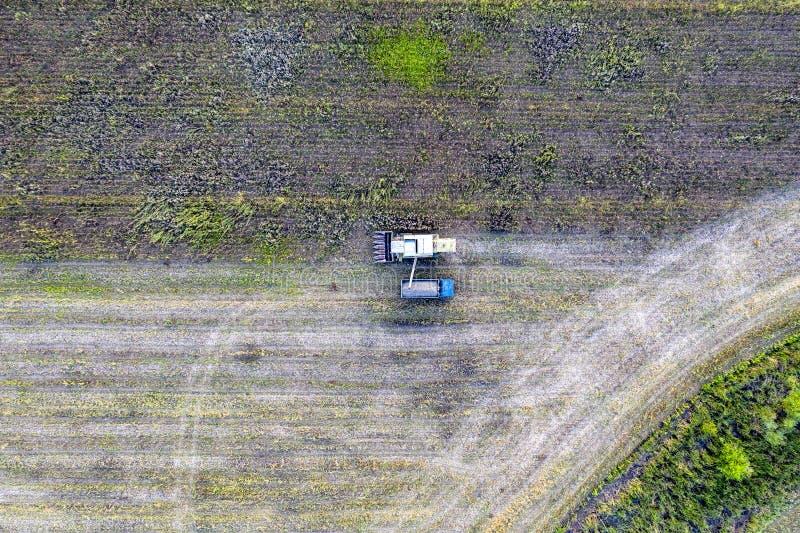 Combine harvester uploads harvest sunflower grains to dump truck. Harvesting season. Agriculture scene. Agricultural harvest field royalty free stock photos